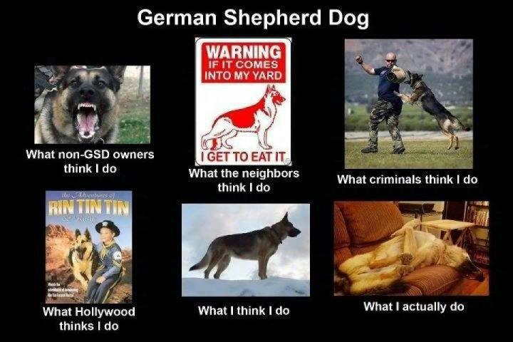 What my friends think I do what I actually do - German Shephard Dog